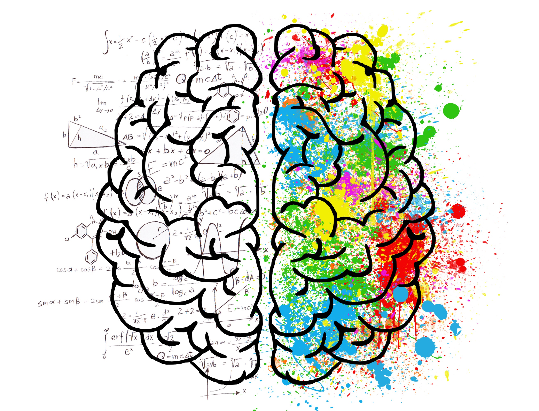 brain-2062057
